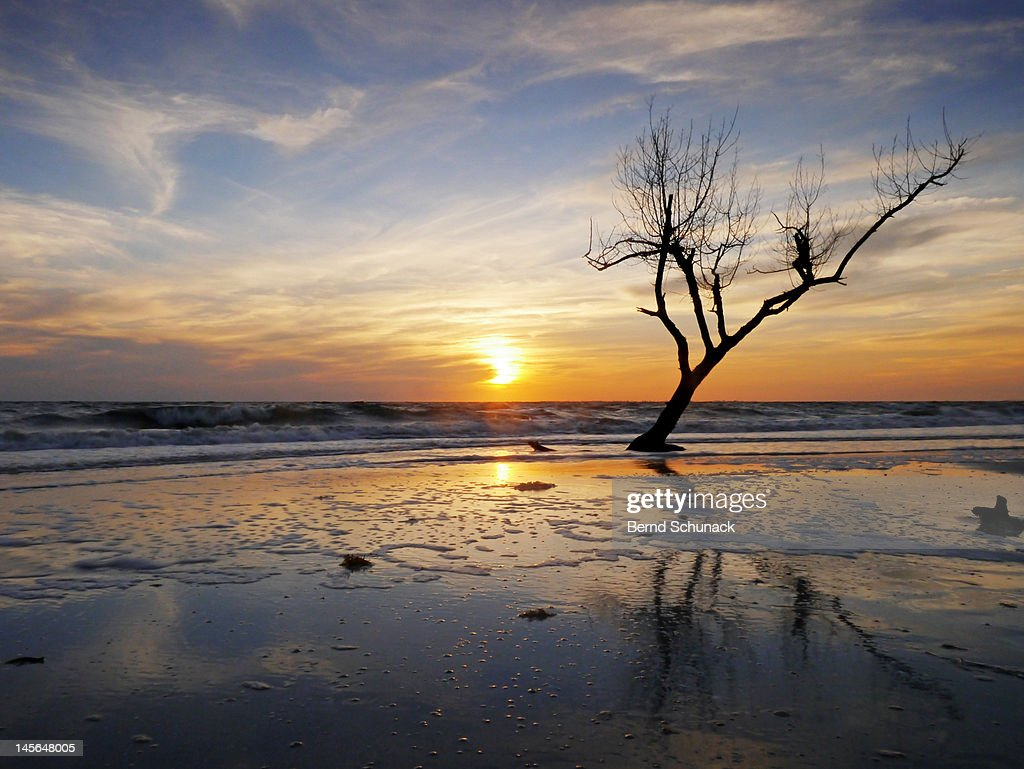 Sunset with dead tree at seaside : Stock-Foto