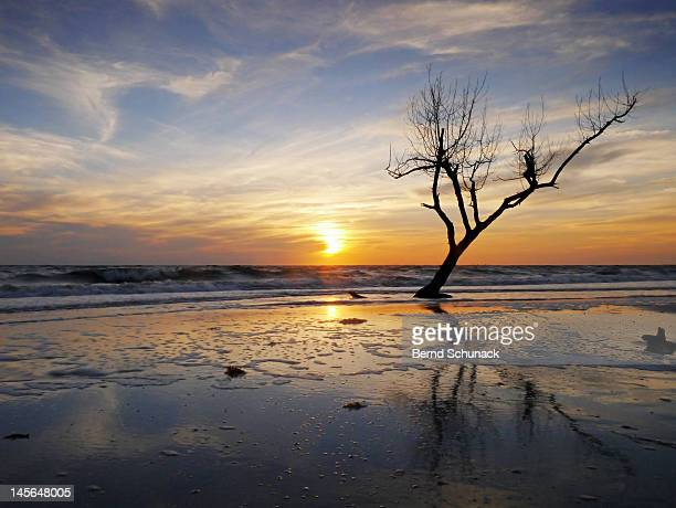 sunset with dead tree at seaside - bernd schunack stock-fotos und bilder