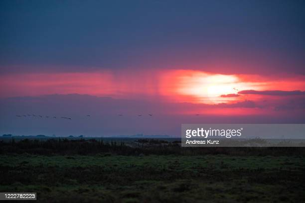 sunset with flamigos flying by in camargue in france - bouches du rhone stock pictures, royalty-free photos & images