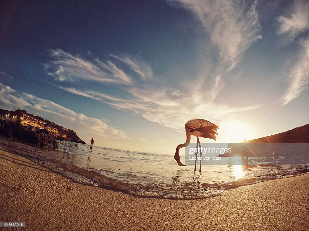 Sunset with flamingo in Sicily : Stock Photo