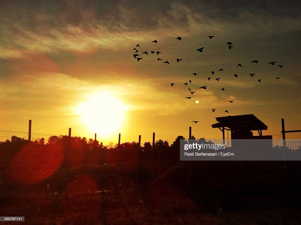 Sunset With Flock Of Birds Flying Against Sky : Foto stock