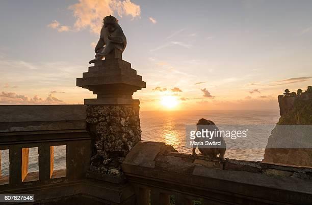 Sunset with monkeys - Uluwatu Temple, Bali, Indonesia