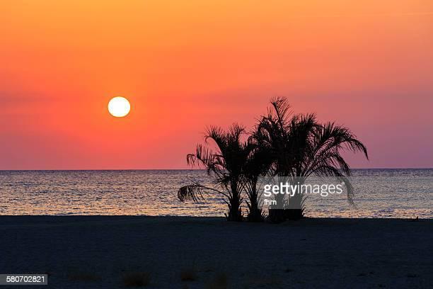 sunset with palm tree silhouette - catalogne photos et images de collection