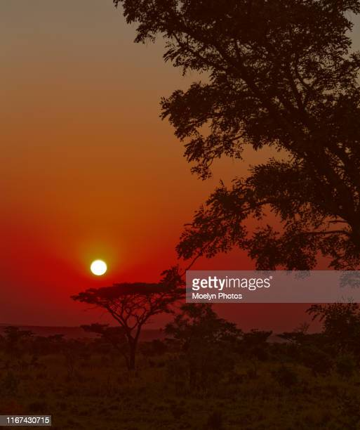 sunset-limpopo vertical - limpopo province stock pictures, royalty-free photos & images
