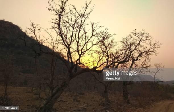 Sunset/Ranthambore National Park-Rajasthan