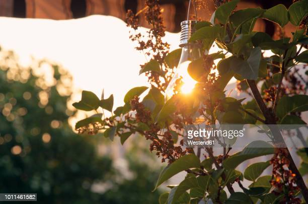sunshade, solar-powered lightbulb at sunset - energy efficient lightbulb stock photos and pictures