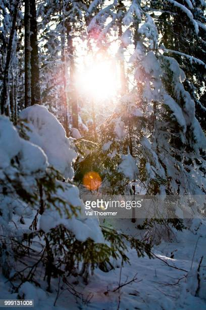 Sunshine in winter forest in the Alps near Berchtesgaden, Bavaria, Germany