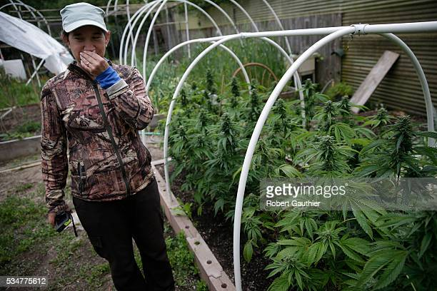 Sunshine Johnston grows cannabis with her husband Eric on a small family farm in Humboldt County California on May 5 2016 She stops to smell the...
