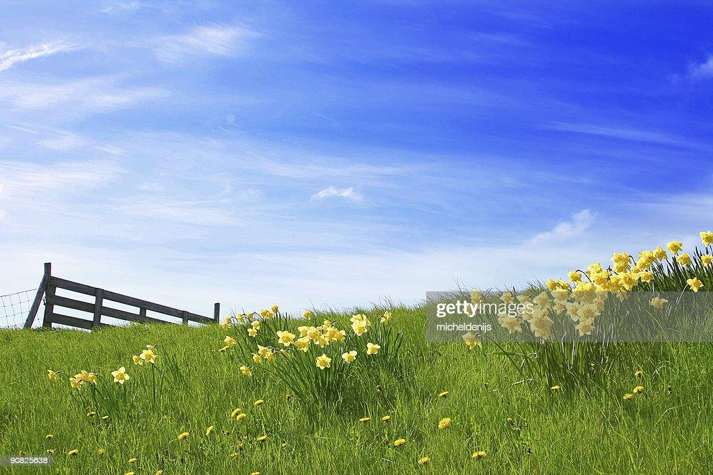 Sunshine Landscape : Stock Photo