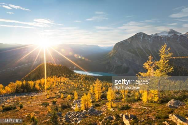 sunshine lighting up the alpine larch trees on little beehive, banff national park, alberta, canada - paysage enchanteur photos et images de collection