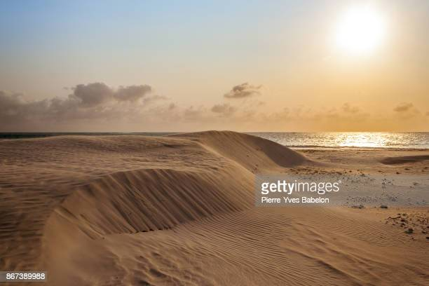 sunshine on the dunes - pierre yves babelon stock pictures, royalty-free photos & images