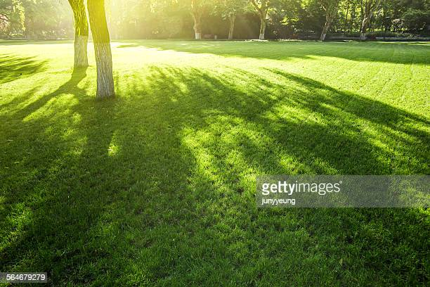 sunshine on the lawn