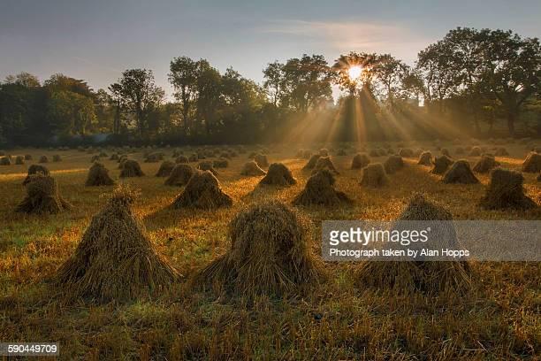 Sunshine on the sheaves