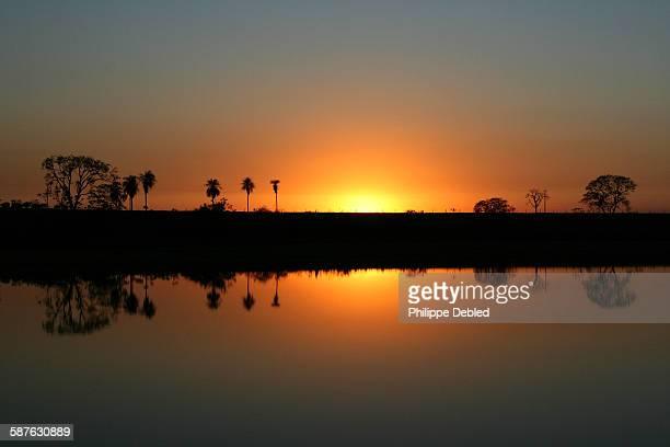 Sunshine reflection trees on the lake