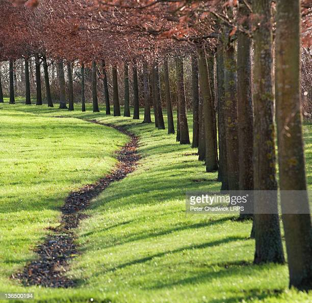 Sunshine through line of planted trees