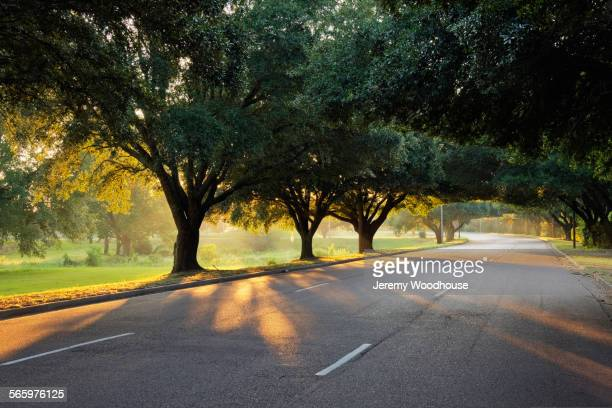 Sunshine through trees on empty road
