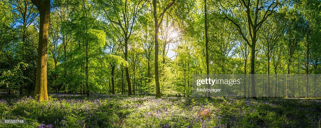 Il sole caldo idilliaca Woodland radura verde foresta Panorama felci fiori selvatici : Foto stock