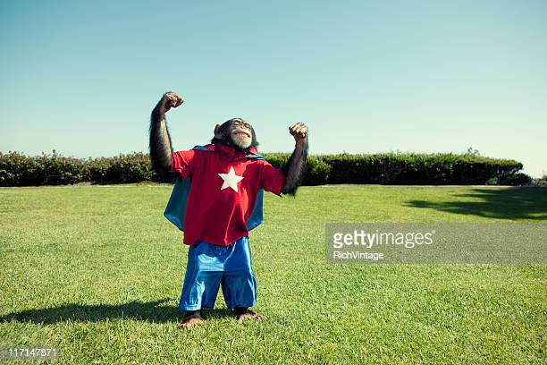 Super Chimp