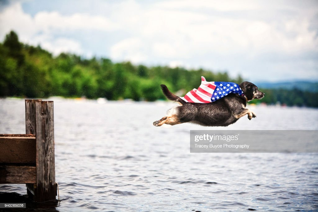 Super Dog Americana : Stock Photo