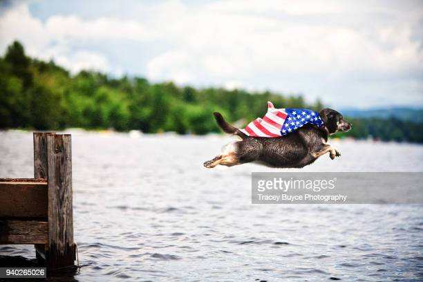 super dog americana - independence day stock pictures, royalty-free photos & images