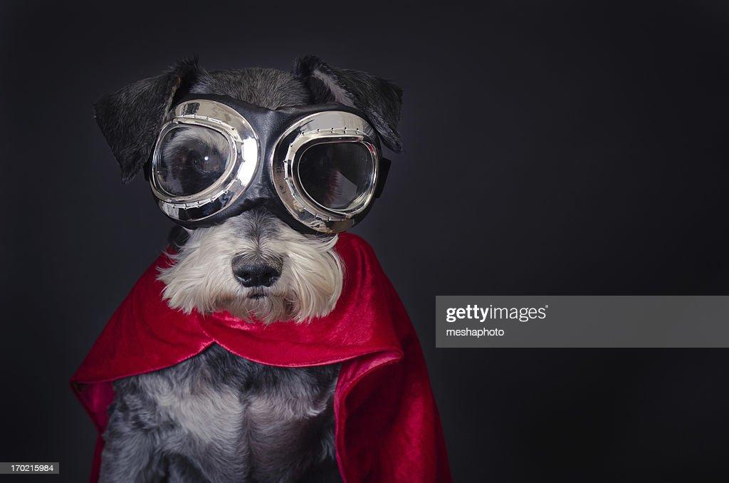 Super Dog : Stock Photo