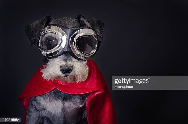 super dog - funny animals stock pictures, royalty-free photos & images