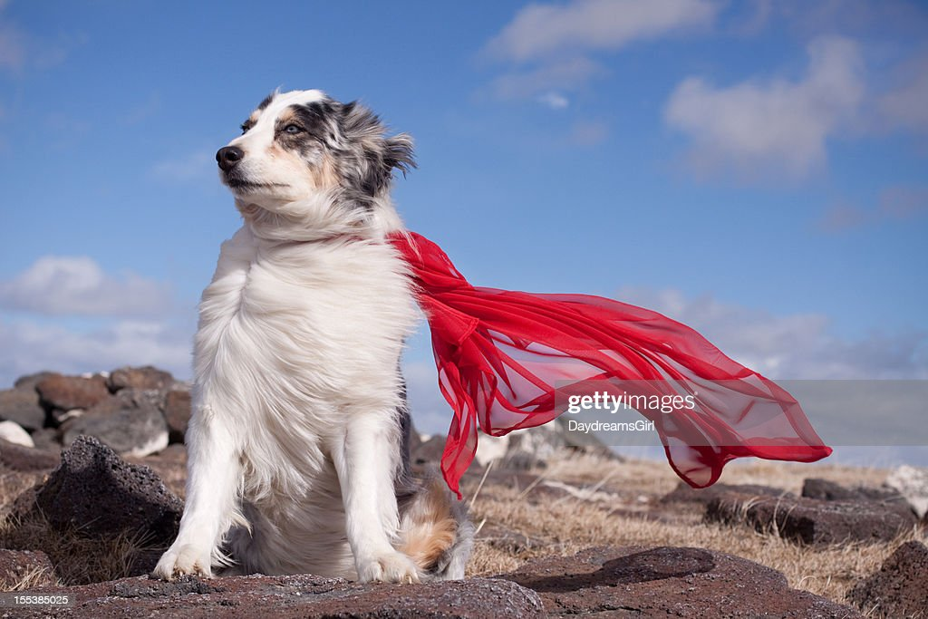 Super Hero Dog in wind : Stock Photo