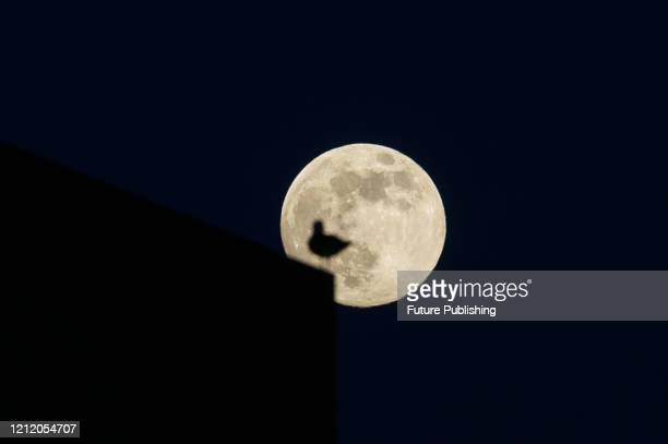 A super moon also called full flower moon rises above central London on 06 May 2020 in London England The May full moon is the third and final...