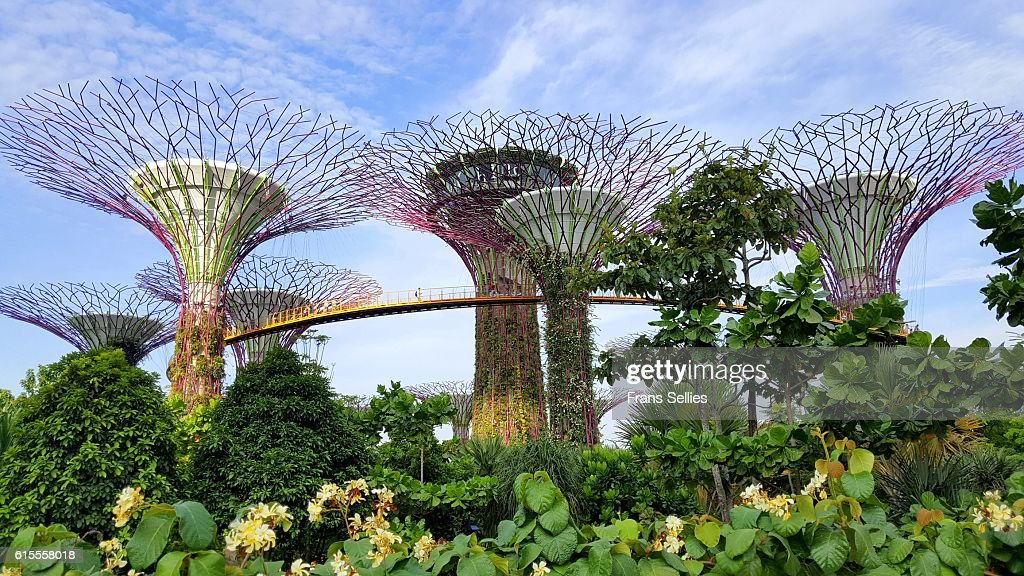 Super Tree Grove, Gardens by the Bay, Singapore : Stockfoto