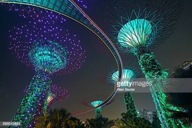 Super tree grove in Singapore's Gardens by the Bay