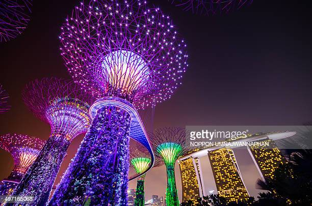Super Trees in Gardens by the Bay and Marina Bay Sands.
