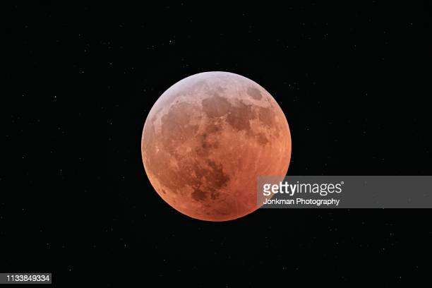 super wolf blood moon total eclipse - wolf moon stock photos and pictures