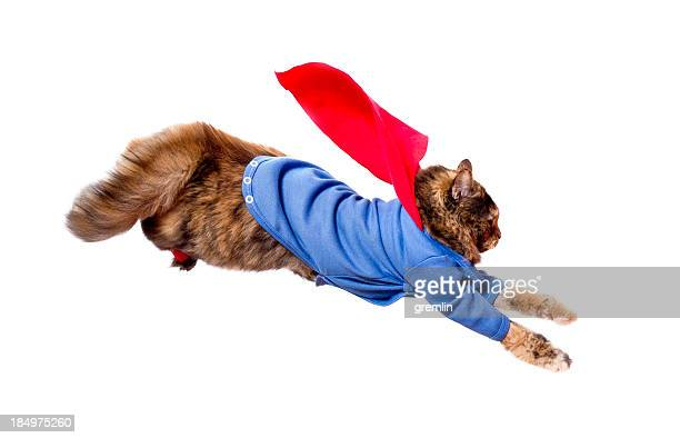 supercat in flying action - hero stock photos and pictures