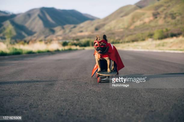 superhelden-hund - leistung stock-fotos und bilder
