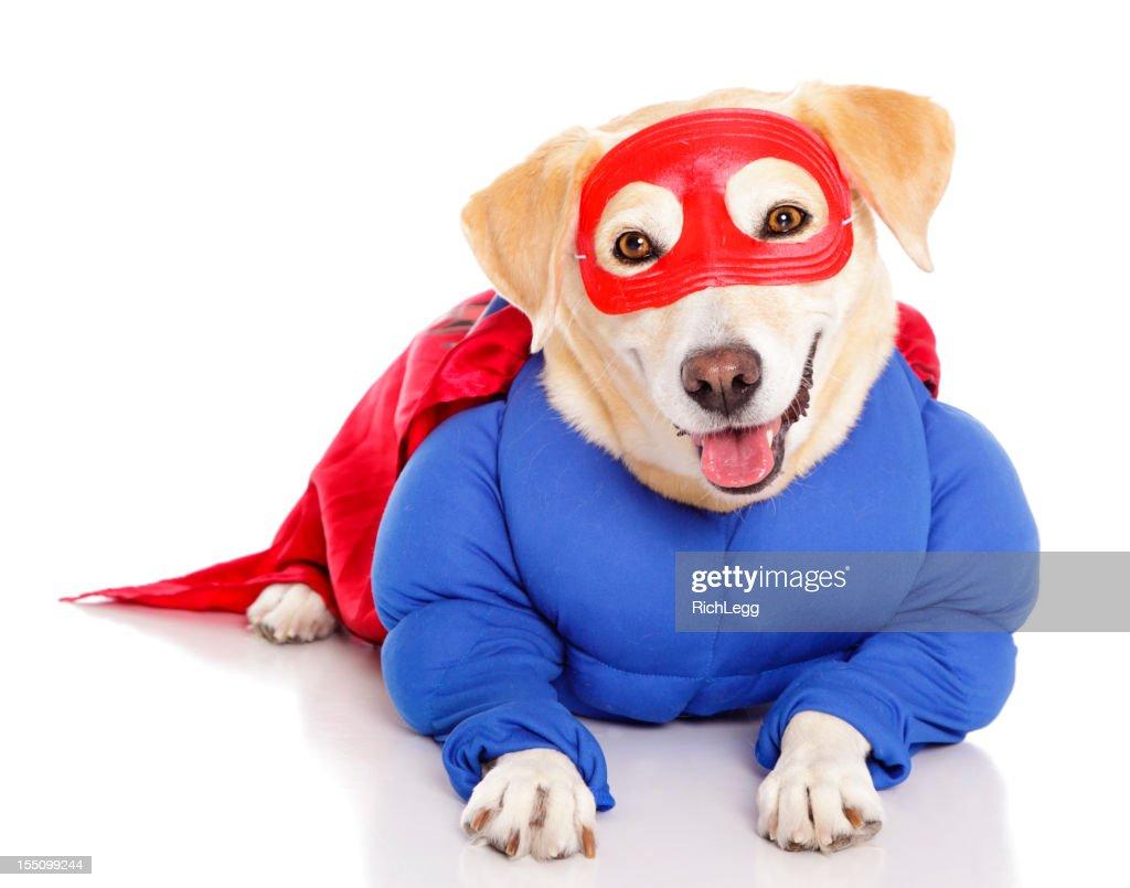Superhero Dog : Stock Photo
