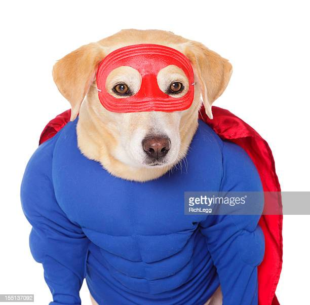 superhero dog - pet clothing stock pictures, royalty-free photos & images