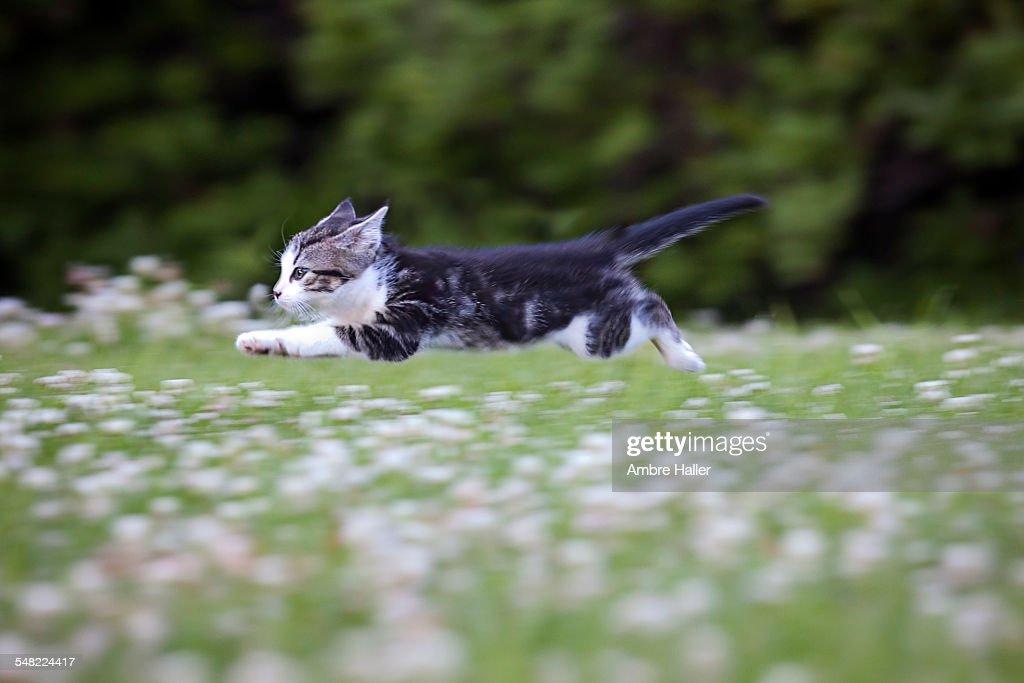 Superhero kitten : Stock Photo