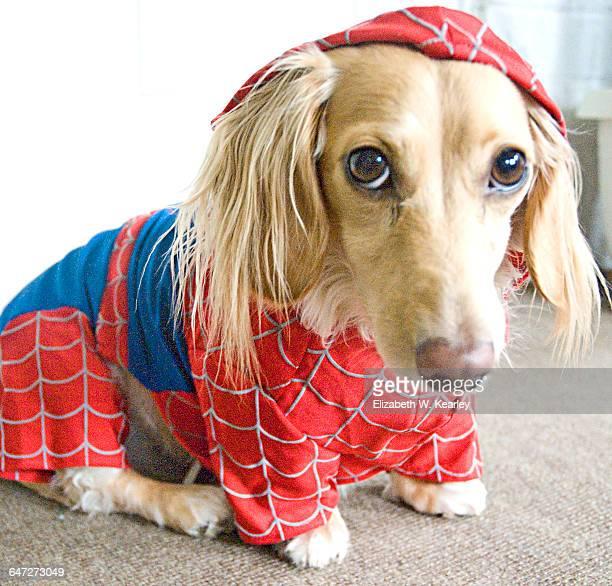 Superhero Pets