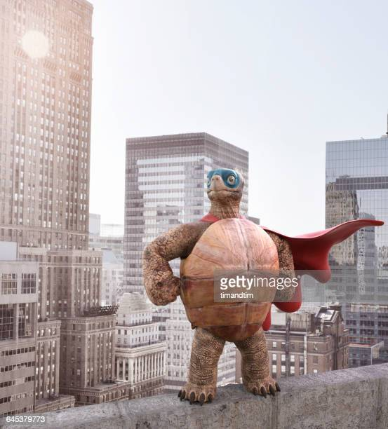 Superhero tortoise posing at the top of a building