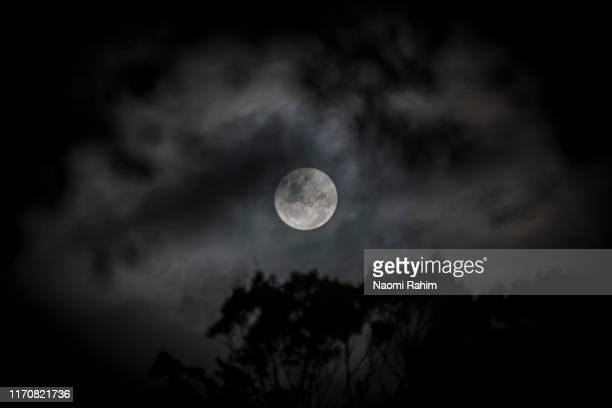 supermoon on a cloudy night, surrounded by cloud and a tree silhouette - luna nera foto e immagini stock