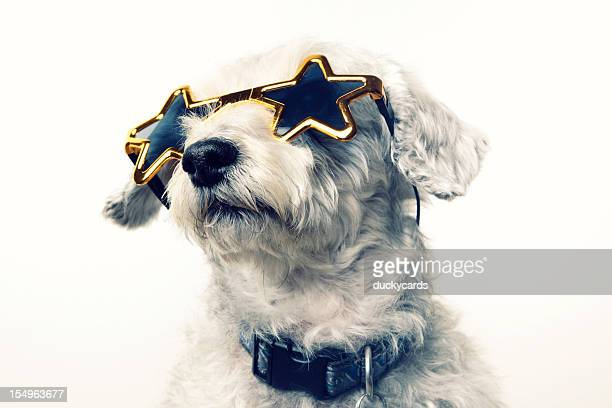 superstar celebrity dog - beroemdheden stockfoto's en -beelden