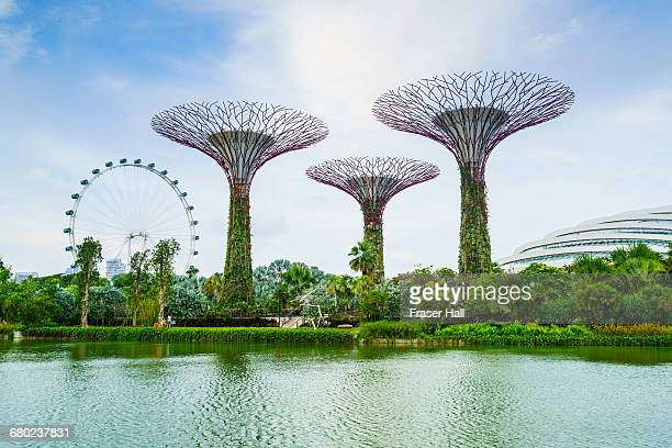 supertree grove, gardens by the bay, singapore - singapore stock pictures, royalty-free photos & images
