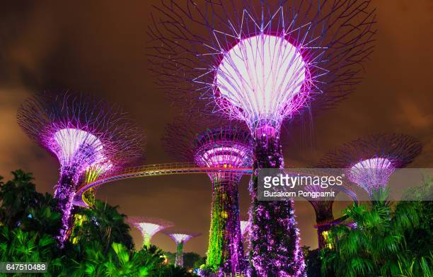 Supertrees garden at night, garden by the bay