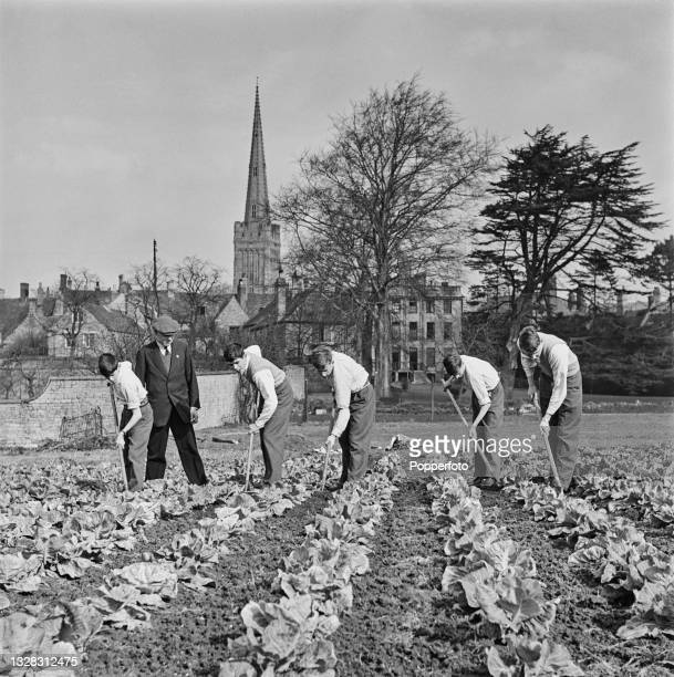 Supervised by a gardener, a group of public school boys hoe between lines of cabbages on a vegetable plot created from part of the school grounds in...