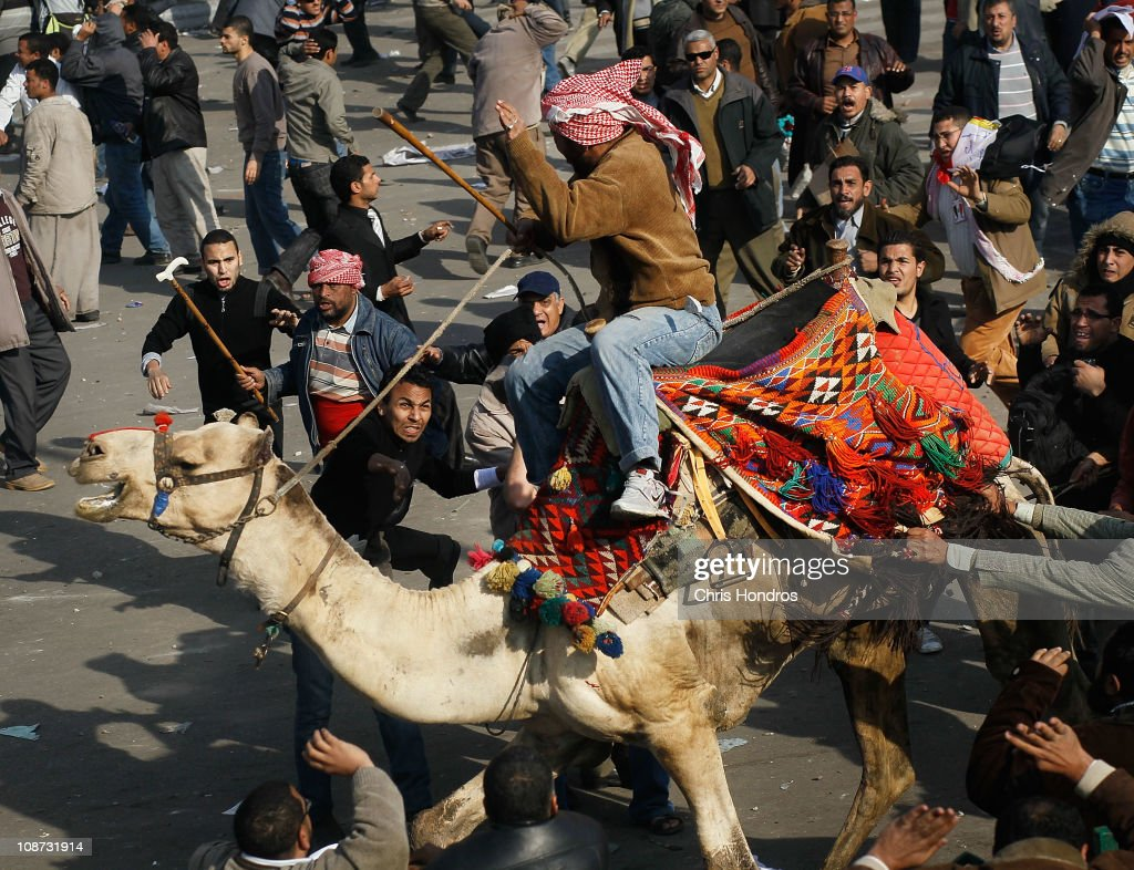 A supporter of embattled Egyptian president Hosni Mubarek rides a camel through the melee during a clash between pro-Mubarak and anti-government protesters in Tahrir Square on February 2, 2011 in Cairo, Egypt. Yesterday President Mubarak announced that he would not run for another term in office, but would stay in power until elections later this year. Thousands of supporters of Egypt's long-time president and opponents of the regime clashed then today in Tahrir Square, throwing rocks and fighting with improvised weapons.