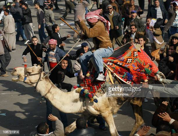 A supporter of embattled Egyptian president Hosni Mubarek rides a camel through the melee during a clash between proMubarak and antigovernment...