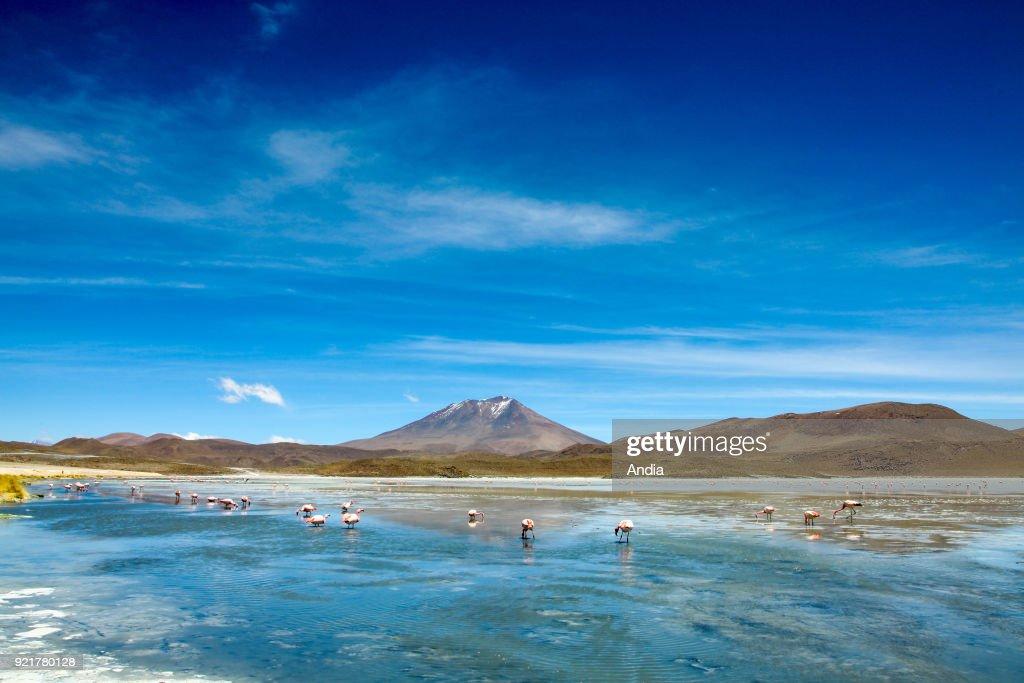 Laguna Hedionda. : News Photo