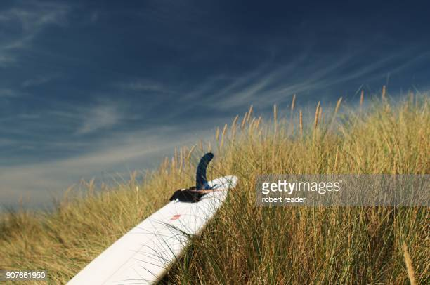 Surf board resting on grass sand dunes