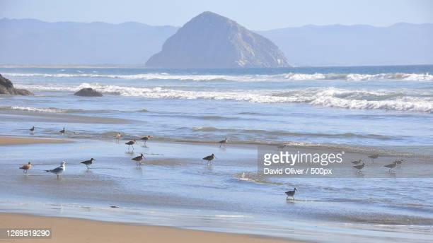 a surf day in japan, cayucos, united states - cayucos stock pictures, royalty-free photos & images
