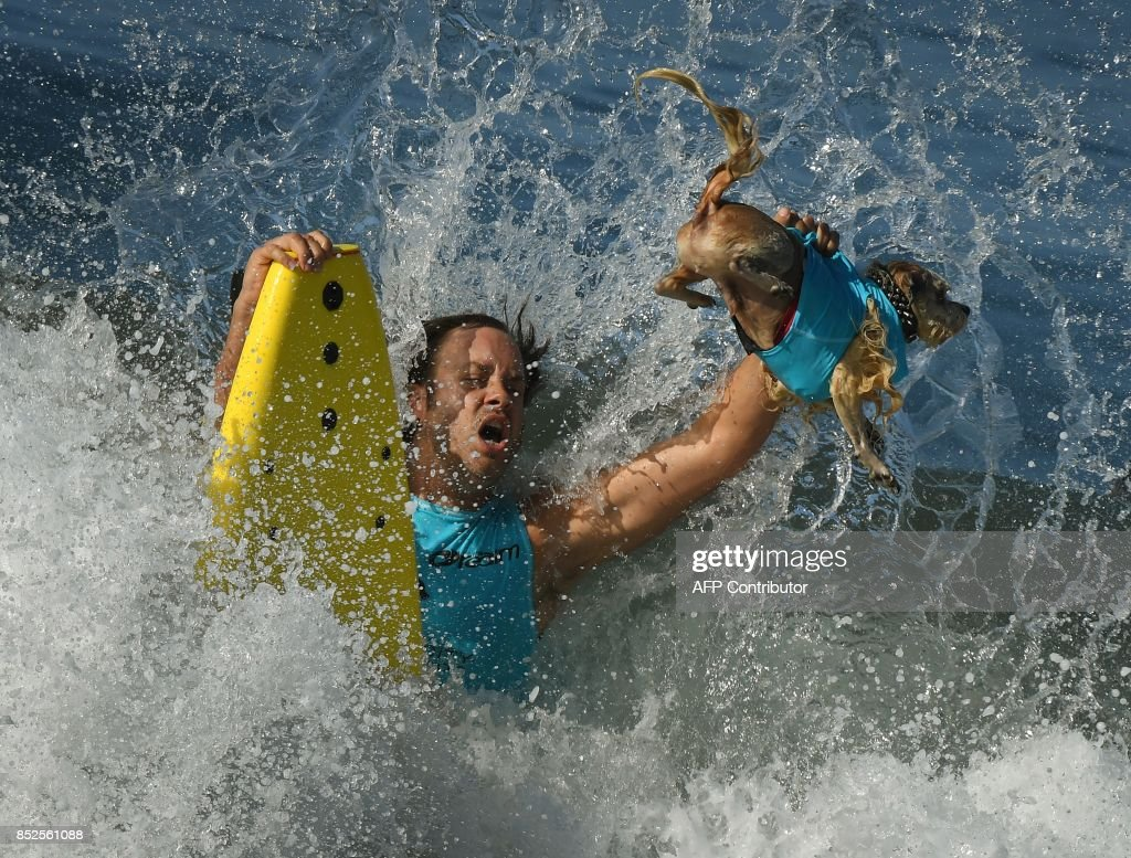 Surf dog Prince Dudeman and owner Ryan Thor get hit by a large wave in the second heat of the Small Dog event during the 9th annual Surf City Surf Dog event at Huntington Beach, California on September 23, 2017. Dogs, big and small, and some in tandem braved the large swell that greeted them during the iconic event at Surf City, USA. / AFP PHOTO / Mark RALSTON